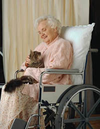 Picture of an older woman, in a wheelchair, with a kitten